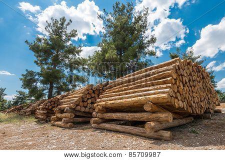 Raw Pine Wood Logs, Turkey