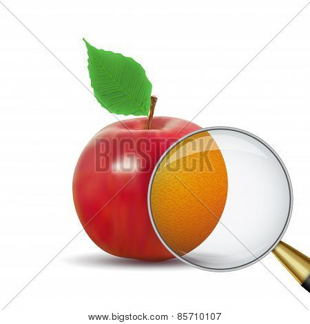 Vector illustration red apple