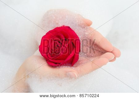 Red Rose And Foam In Female Hands