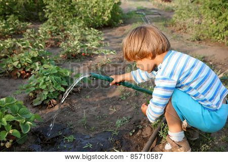 Boy Watering Strawberries.