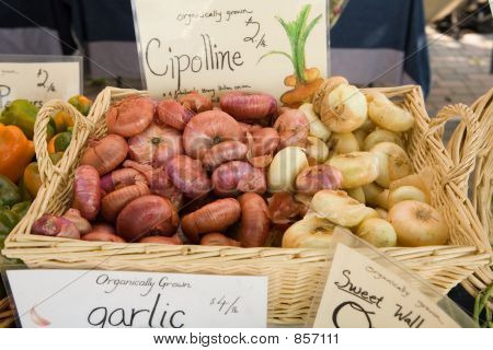 Cipolline