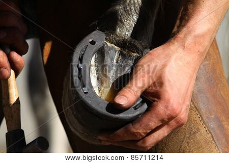 Farrier Working process closeup