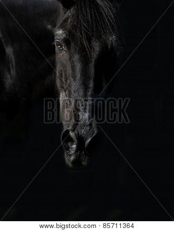 Black Horse On a Black