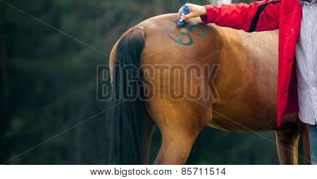 Veterinary Makes Marking On A Horse