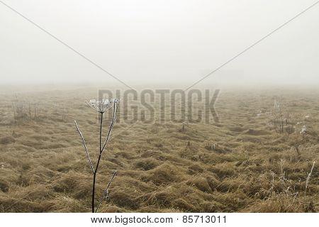 Fields In Morning