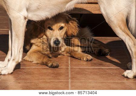 Lying dog under standing dog