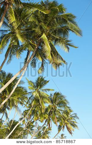 palms over blue sky
