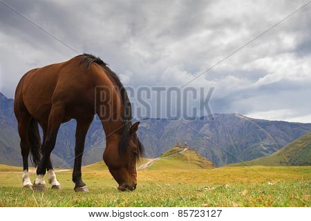 Georgia. Horse on the mountain pasture