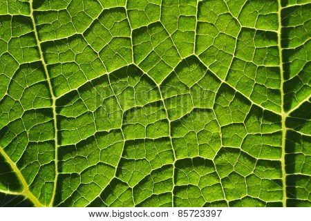 Green leaf fibers close-up background