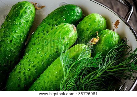 Fresh Organic Cucumbers With Dill In White Colander