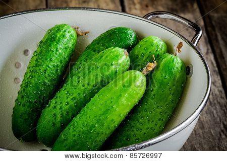 Fresh Organic Cucumbers In White Colander