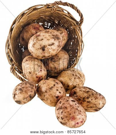 potatoes heap in basket isolated on a white background