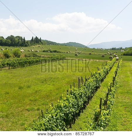 Lucca (tuscany, Italy), Countryside