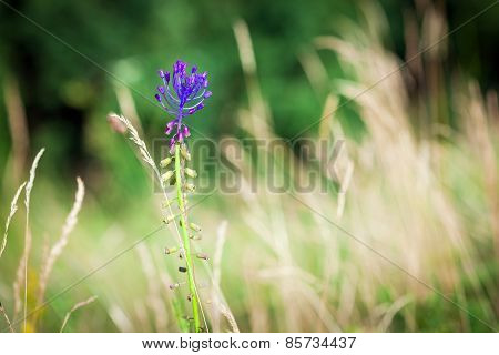 Medicinal Wild Spring Flowers