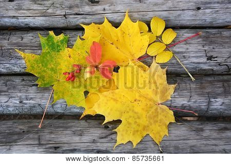 Autumn Scene- Different Autumn Leaves On The Wooden Background