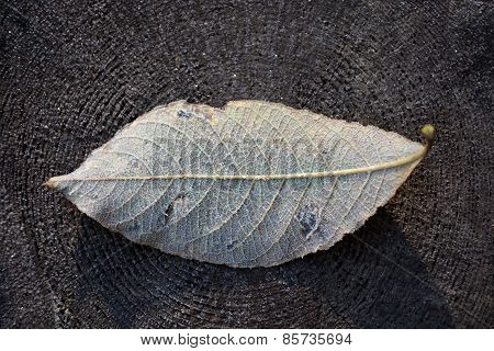 Frozen Leaf On The Wooden Background- Closeup View