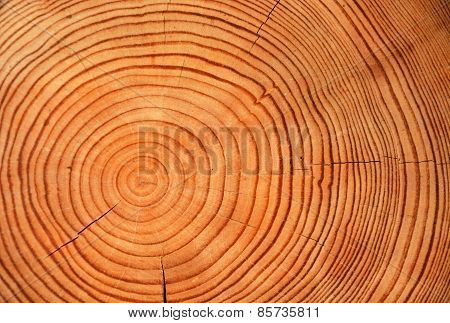 Slice Of Wood Timber As A Natural Background