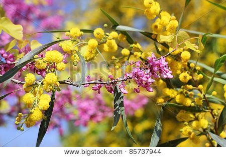 Flowers Of Lilac And Mimosa