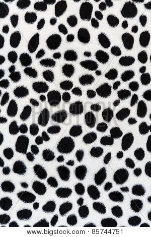Texture Of Leopard Leather