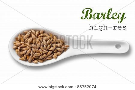 Barley In White Porcelain Spoon