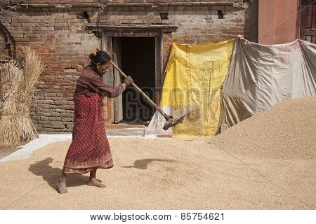 Woman Threshing Grain