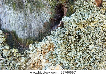 Pattern, Mushroom On Bark, White Fungus