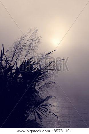 Vietnam Village, Wild Grass, Sunrise
