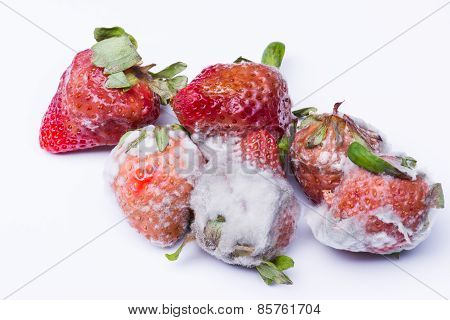 Isolated Spoiled Strawberry
