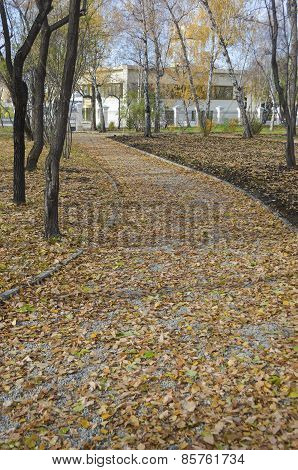 Walk lane, strewn with leaves