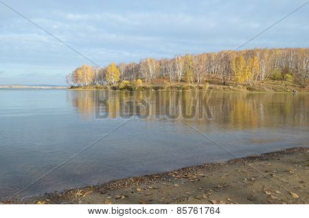 Sunny autumn landscape. Birch forest on the Bay coast