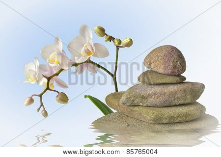 Cairn with orchid