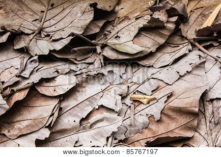Roofs Made From Dry Leaves, Thailand