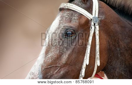 Brown horse with a white blaze and a bridle close-up shot.
