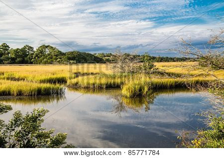Wetland Marshes And Blue Skies