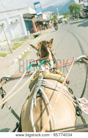Asian Street Viewed From Horse Rickshaw
