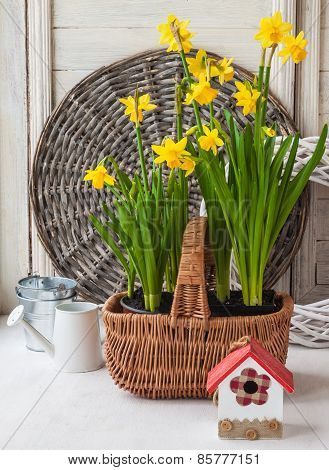 Yellow Daffodils In A Basket