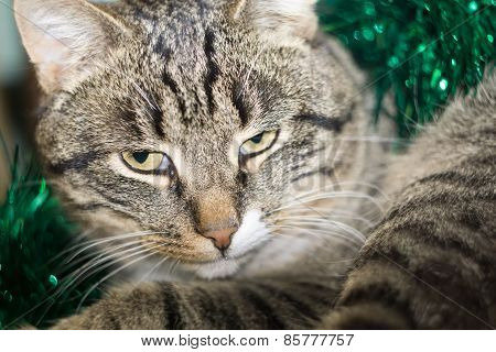 Tabby Cat And Green Tinsel