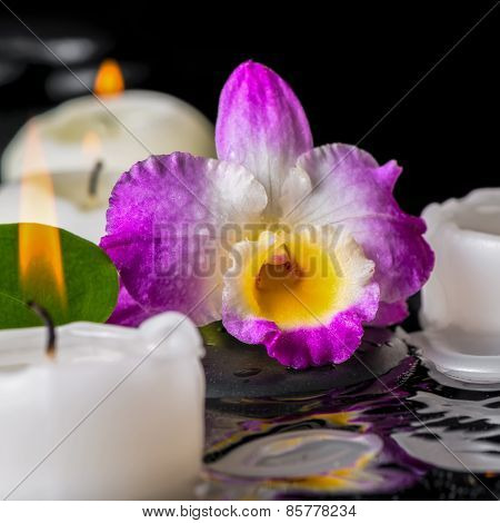 Spa Concept Of Purple Orchid Dendrobium, Leaf With Dew And Candles On Zen Stones In Ripple Reflectio