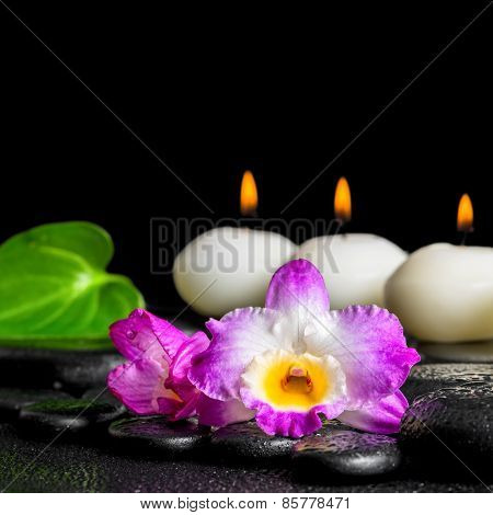 Spa Concept Of Row White Candles, Orchid Flower Dendrobium And Green Leaf On Black Zen Stones Backgr