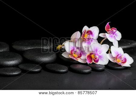 Beautiful Spa Background Of Purple Orchid Phalaenopsis On Black Zen Stones With Drops,