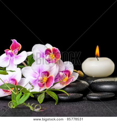 Beautiful Spa Still Life Of Purple Orchid Phalaenopsis, Green Twigs And Candle On Black Zen Stones W