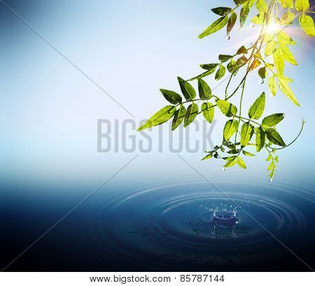 Foliage and drops falling in water with sunbeams
