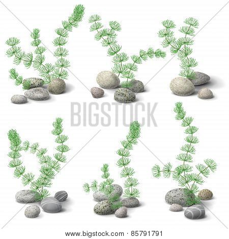 Hornwort And Pebbles