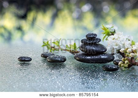 Black stones and almond flowers with water drops