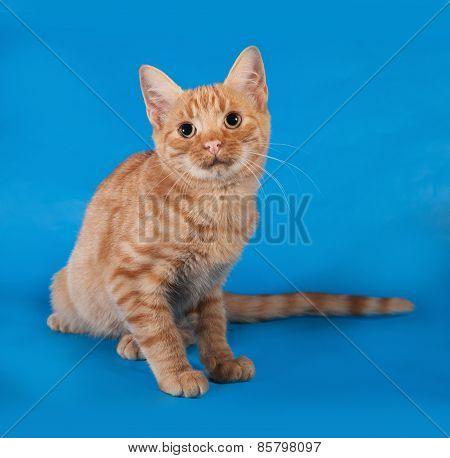 Ginger Kitten Sitting On Blue