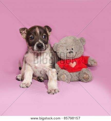 Brown And White Puppy Sitting With Teddy Bear On Pink