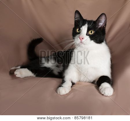 Black And White Cat Sitting On Brown