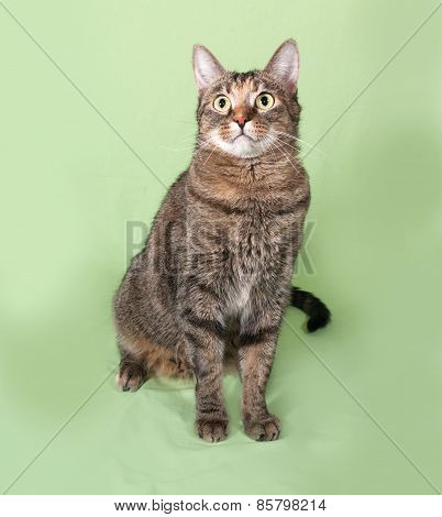 Tabby Cat Sitting On Green