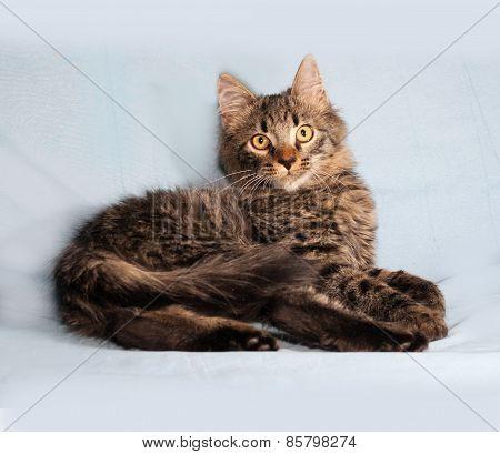Fluffy Tabby Siberian Kitten Lying On Blue