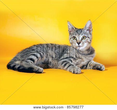 Striped Kitten Lying On Yellow